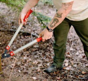 boom snoeien Staatsbosbeheer